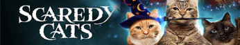 دانلود سریال اسکردی گربه Scaredy Cats 2021